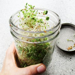 How to Make Your Own Sprouts – Easy Step by Step Guide