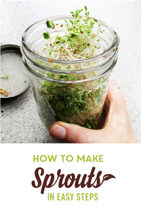 Raw Vegan DIY Sprouts Guide