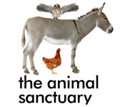 The Animal Sanctuary NZ